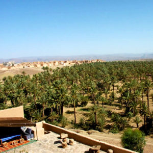 A palm tree vista in Greater Southern Morocco.