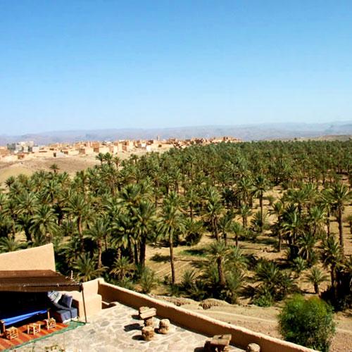 Une vue sur les palmiers dans le Grand Sud du Maroc.