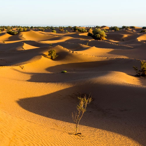 Notre Hamada de Draa et voir les dunes d'Erg Chigaga, prendre les habitudes de vie locales et se délecter d'une extraordinaire expérience dans le désert.