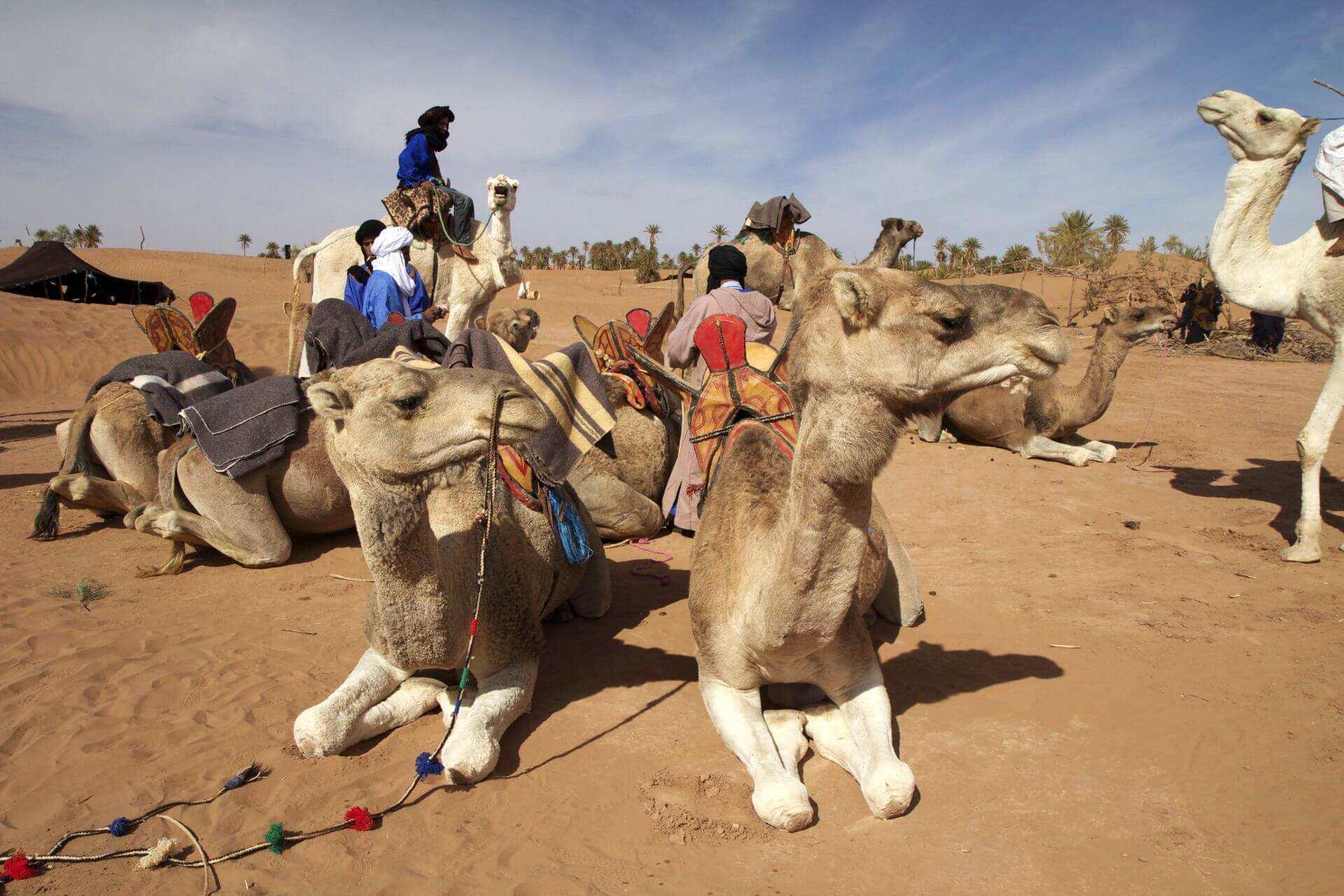 Cherg Expeditions Sahara Desert Camel Tours
