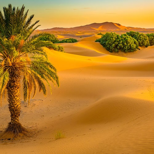 The last oasis of the Draa Valley in the Sarah Desert