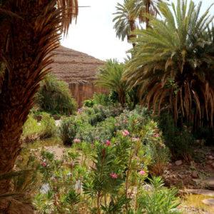 De belles palmiers couvrent le sentier de la promenade naturelle de la vallée de l'Ounila.